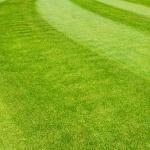 Pohlmann&Lange Hauspersonalvermittlung sucht mit ihrer Hauspersonalagentur für eine Unternehmerfamilie in Schleswig Holstein einen Gärtner oder Hausmeister oder ein Haushälter-Ehepaar. Dieses Stellenangebot ist eine Vollzeitstelle.
